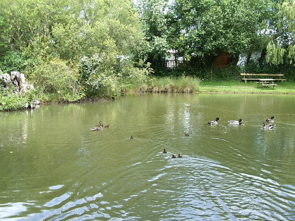 étang de pêche du camping