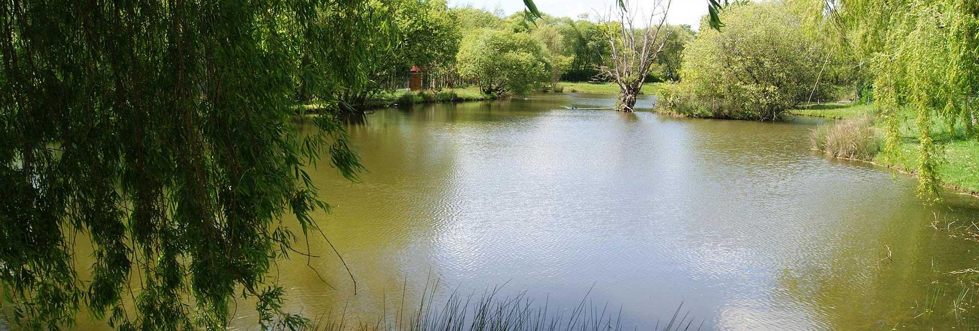 camping avec 2 étangs de pêche en Vendée